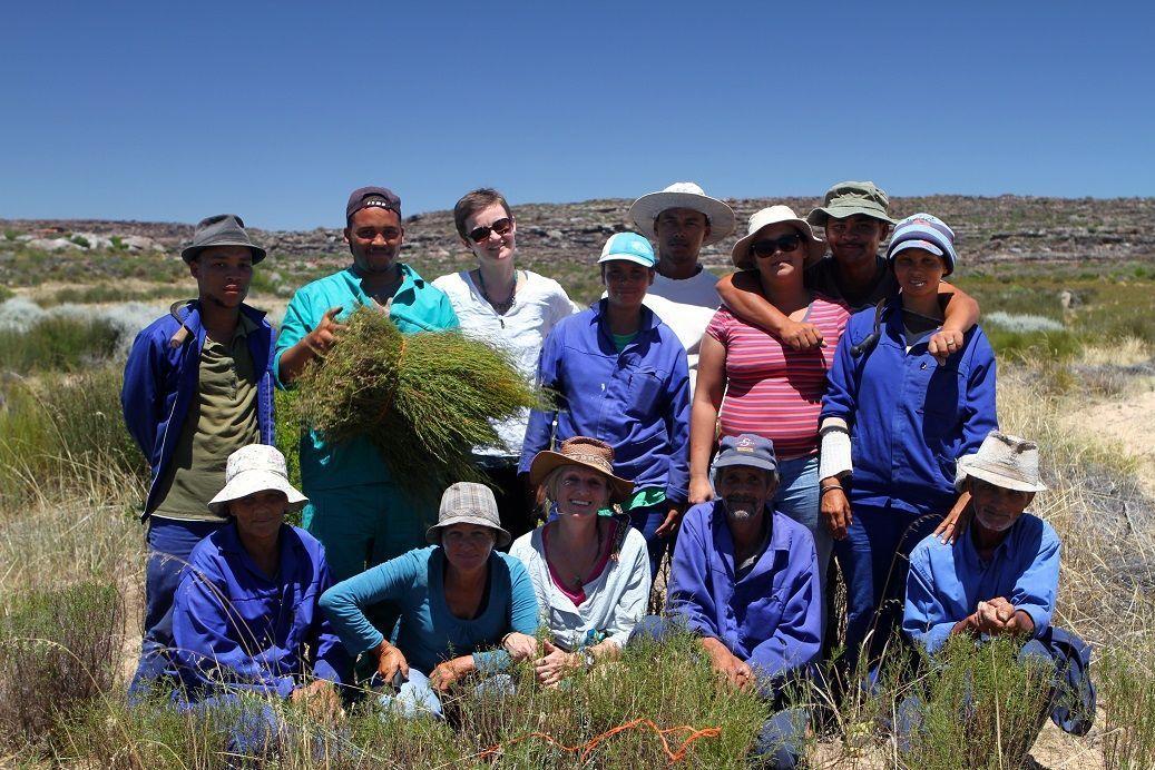 L'équipe de cueilleurs salariés est à pied d'œuvre sous un soleil de plomb. Nous renforçons leurs effectifs pour quelques heures de cueillette…au prix de quelques coups de soleil !